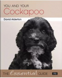 you_and_your_cockapoo